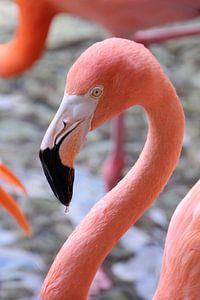 Drinking Flamingo von Ivo Schuckmann