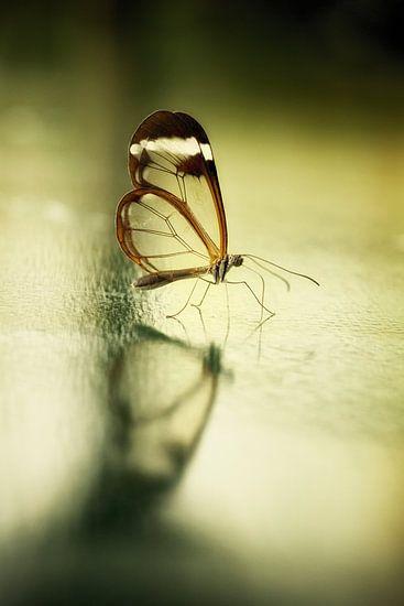 Reflection of a butterfly... van Rigo Meens
