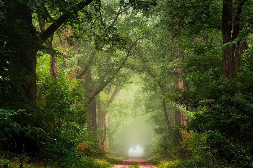Weelderig bospad van Edwin Mooijaart