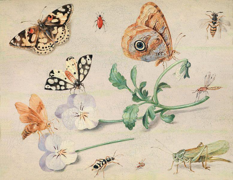 Studium von Insekten und Blumen, Jan van Kessel von Meesterlijcke Meesters