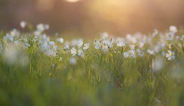 Sonnen waldblumen von Tania Perneel