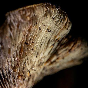 Die Sporen eines Pilzes auf schwarzem Hintergrund von Studio de Waay