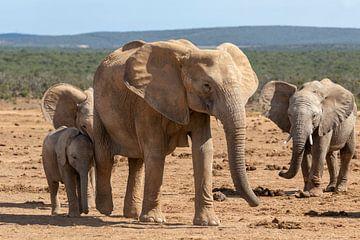 Elefantenfamilie von Martin van der Kruijk