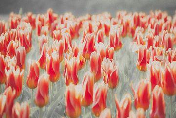 Tulpen von Kees van den Burg