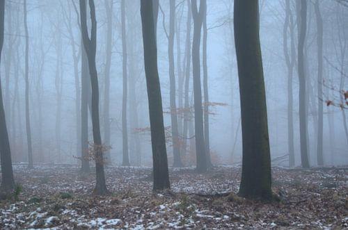 Bomen in de nevel