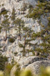 Un écureuil se prélassant au soleil à la base du Half-Dome sur Thomas Bekker