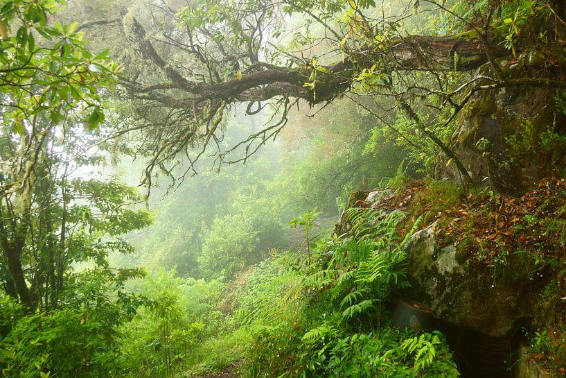 Mist in het bos van Michel van Kooten