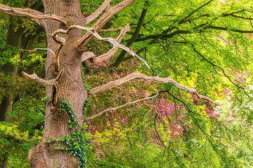 Umgeben vom Frühling! von Karin de Bruin
