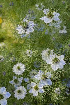 Blauwe veldbloemen van Diana Mets