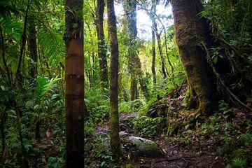 Grüner Dschungel in Panama