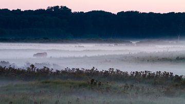 Schotse Hooglander in mist landschap van Menno van Duijn