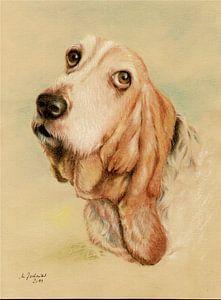 Basset Hound Dog Portrait van