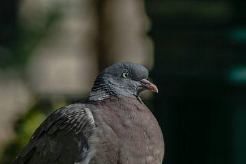 Ce pigeon dans un parc à Paris sur Eric van Nieuwland