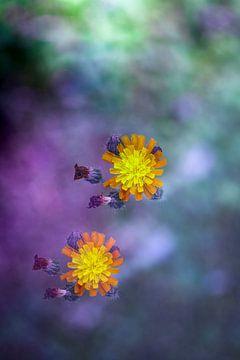 Blumen schweben über dem Feld von Tot Kijk Fotografie: natuur aan de muur