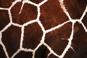 Het patroon van de giraffe van