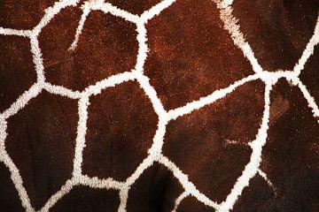 Het patroon van de giraffe sur Rijza Hofstede
