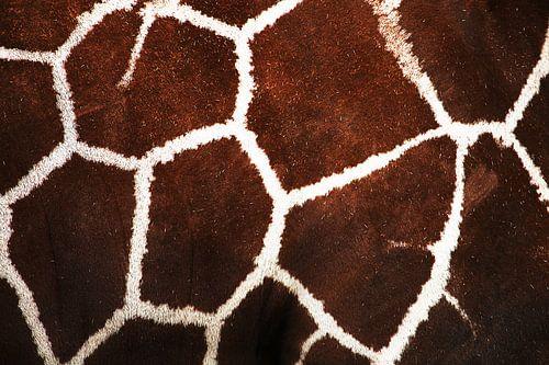Het patroon van de giraffe