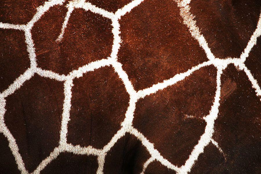 Het patroon van de giraffe van Rijza Hofstede