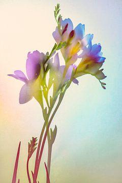 Blumen von tim eshuis