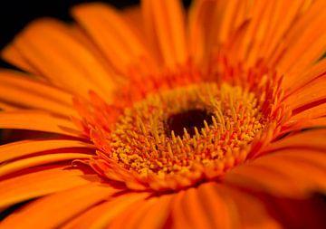 Mooi in Oranje van Jeannet Bijlsma