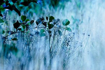 Bloemetjes, veldbloemen, planten, bermen, graan van Anouk Timmerman