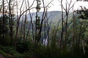 A travers les arbres sur Adinda Heeres