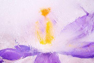 Icy crocus blossom van Monika Scheurer