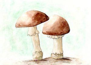 Twee champignons van Sandra Steinke