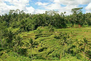 rijstvelden op Bali sur Antwan Janssen