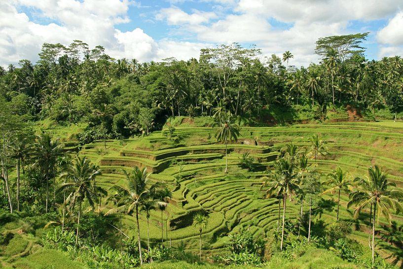 rijstvelden op Bali van Antwan Janssen