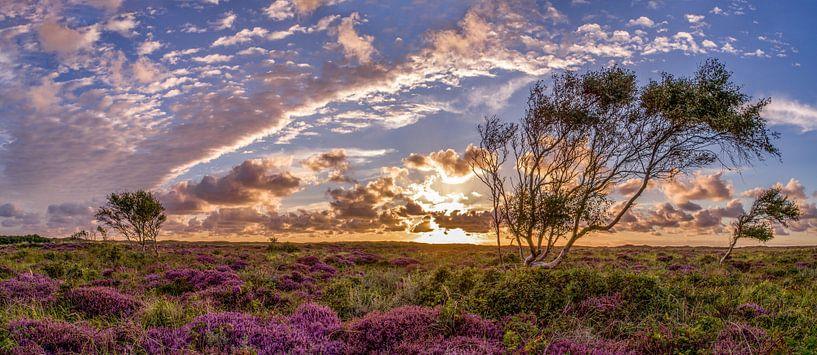De Bollekamer - Heide op Texel  van Texel360Fotografie Richard Heerschap