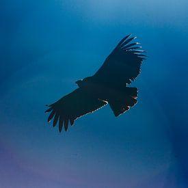 Vliegende Condor in Peru sur Martin Stevens
