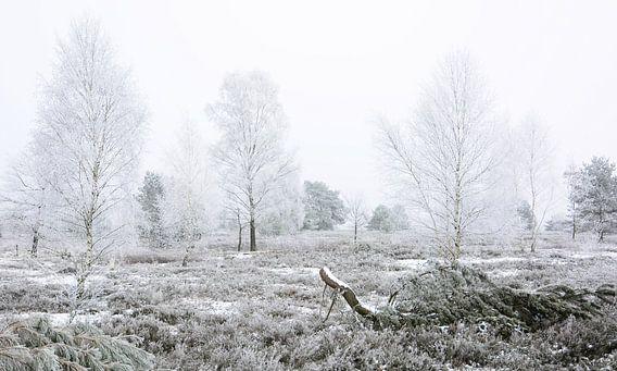 Frosty Heathland