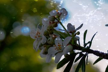 Witte bloemen von Jane Changart