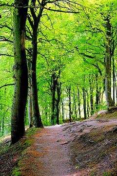 Mei in het bos van Ostsee Bilder