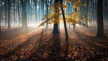 La Forêt à Mât sur Esmeralda holman