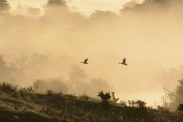 Ganzen in de mist van Remco Van Daalen