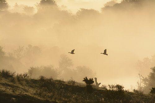 Ganzen in de mist