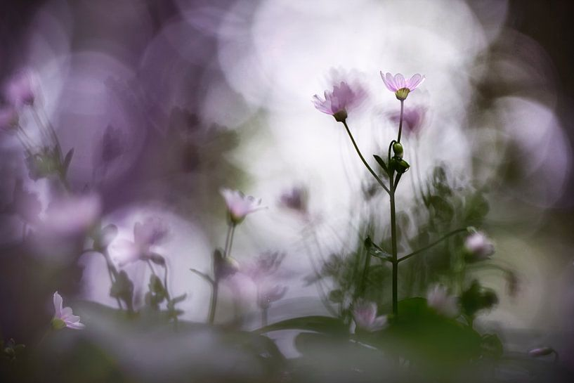 Wonderful morning van Bob Daalder