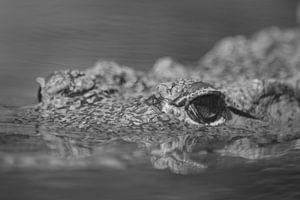 Dans l'œil du crocodile (noir et blanc) sur FotoGraaG Hanneke