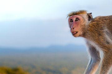 Affe mit offenem Mund von Laura Weemering