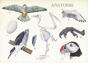 Anatomie eines Vogels