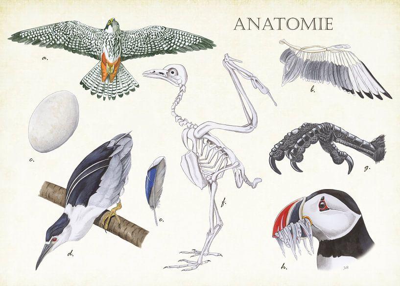 Anatomie eines Vogels von Jasper de Ruiter
