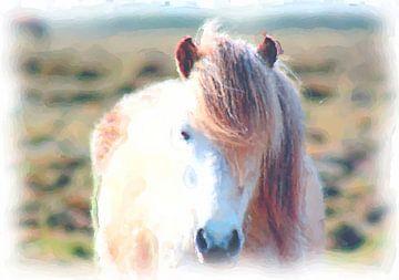 Ijsland pony van Maurice Dawson