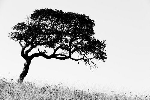Corsican Tree van Cor Ritmeester