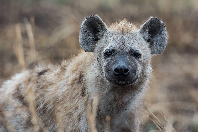 Hyena van Ronne Vinkx