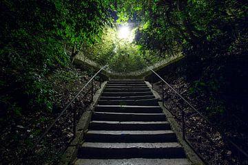 Klim naar het licht van Steve Van Hoyweghen