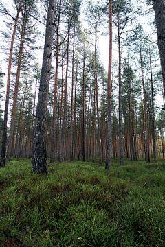 Wald#3 von Mike Ahrens