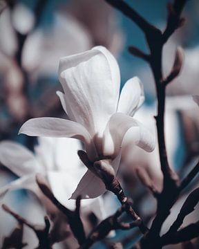 Weiße Magnolie von Nannie van der Wal