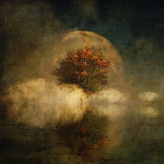 Droomlandschap – Volle maan met een Amerikaanse beuk in de mist
